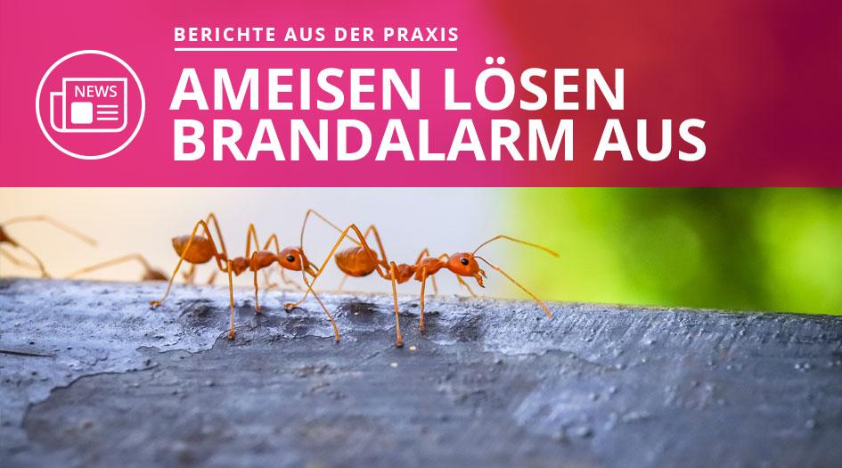 Ameisen lösen Brand aus